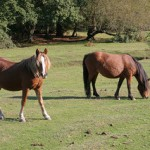 New Forest praised in new tourism campaign by VisitEngland